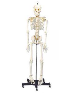 Budget Bart Skeleton
