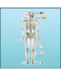 BodyPartChart Anatomical Images