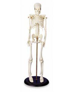 My First Skeleton (Tiny Tim)