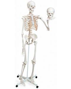 Mr. Plain Skeleton